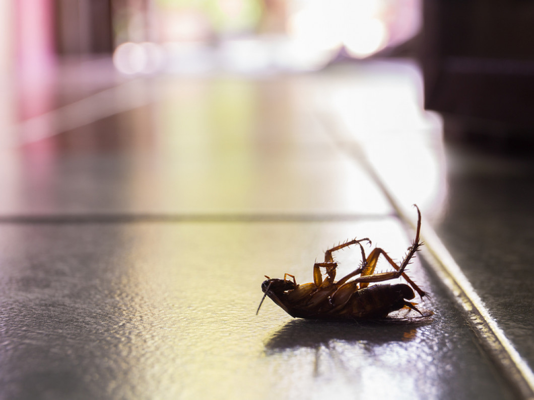Our pest control process is quick and easy